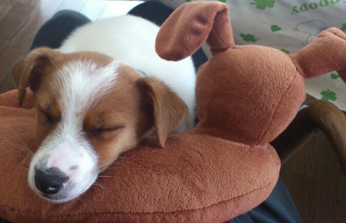 ドギーちゃん枕