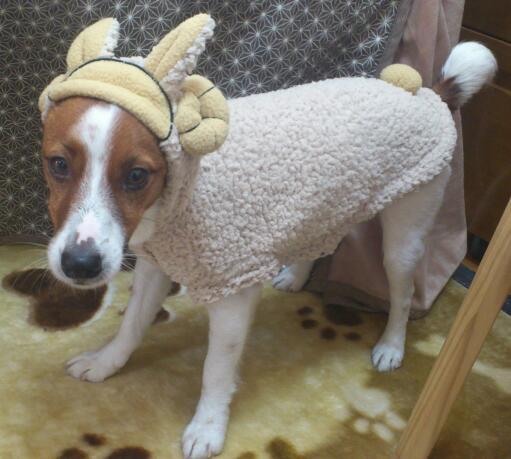 メリーさんの羊?