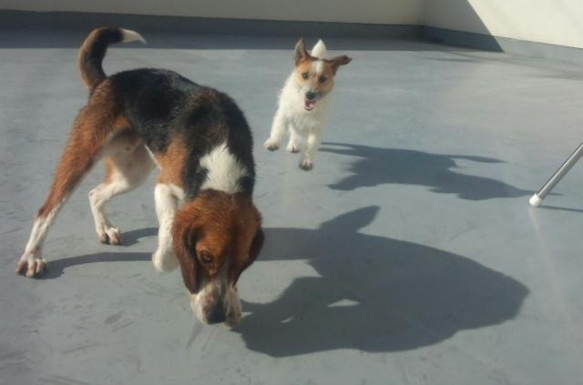 獲物と猟犬